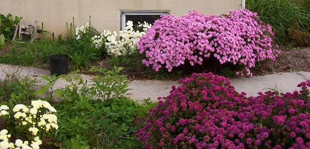rams hill farm flowers